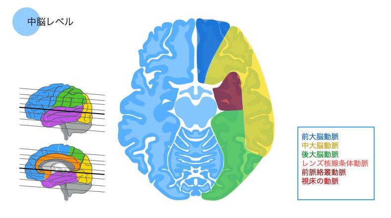 中脳レベル