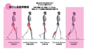 歩行と前庭神経核