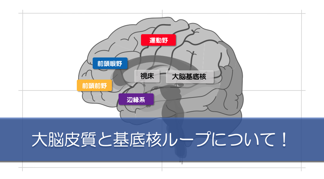 大脳基底核ループのキャッチ