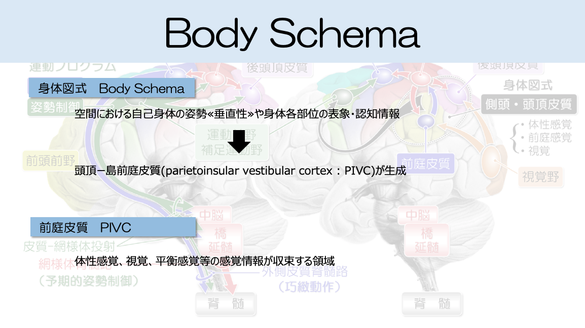 身体図式1