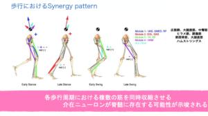 歩行とSynergy