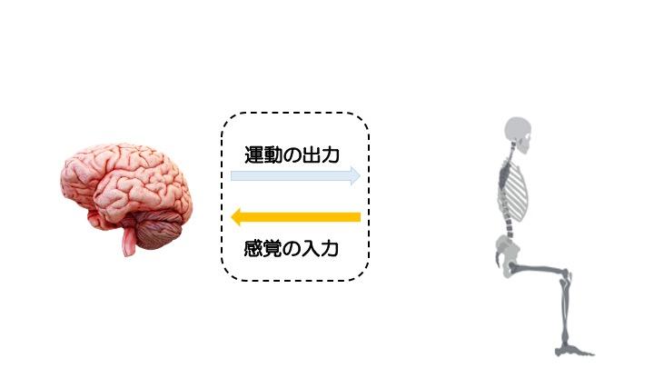 脳と運動1