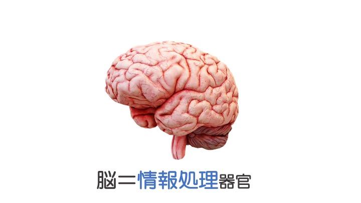 脳と運動2