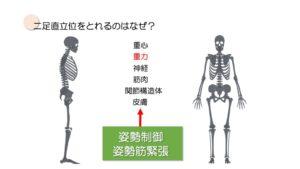 二足直立位をとることができる理由は姿勢制御