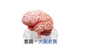 意識は大脳